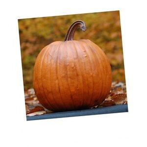 Classic Pumpkin