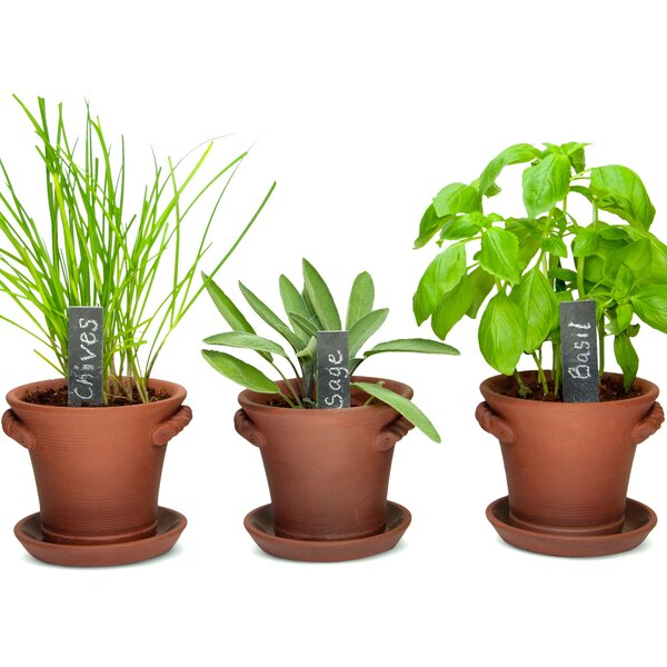 Rustic Charm Herb Trio Growing Kit by Window Garden