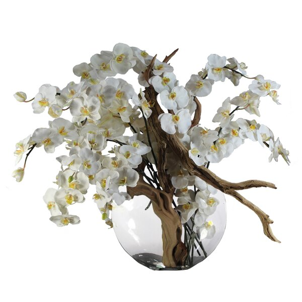 Phalaenopsis and California Sandblasted Ghostwood Orchids Centerpiece in Vase by Rosecliff Heights