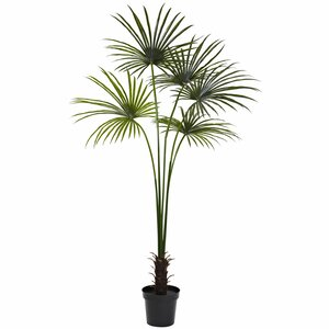 Fan Palm Tree in Pot