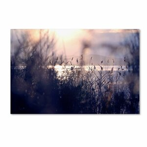'Afternoon Glory' by Beata Czyzowska Young Photographic Print on Wrapped Canvas by Trademark Fine Art