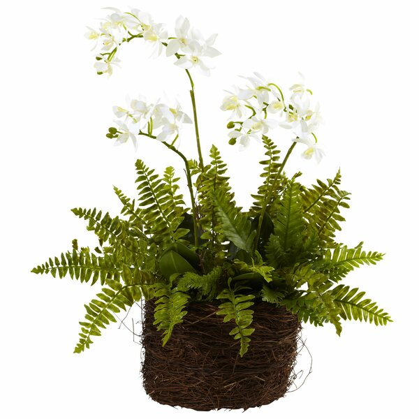 Mini Phalaenopsis and Fern with Bridsnest Planter by Nearly Natural