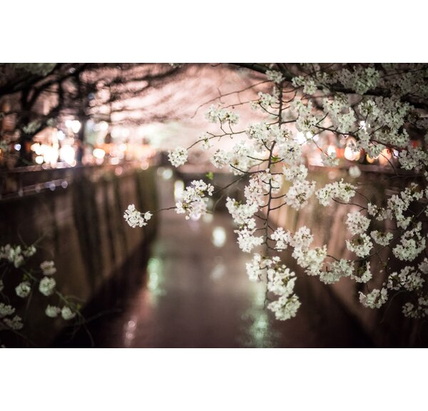 Tokoyo Nights-Japan by Scott Barlow Photographic Print on Wrapped Canvas by Hadley House Co