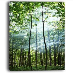 'Green Sunny Forest' Photographic Print on Wrapped Canvas by Design Art