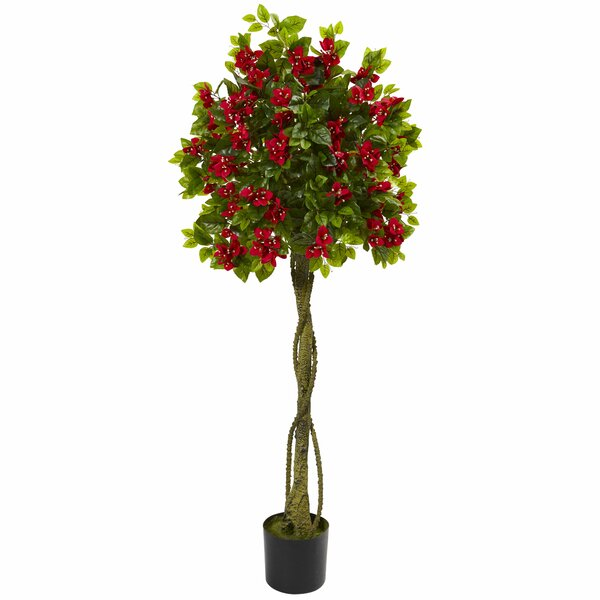Bougainvillea Ficus Topiary by Red Barrel Studio