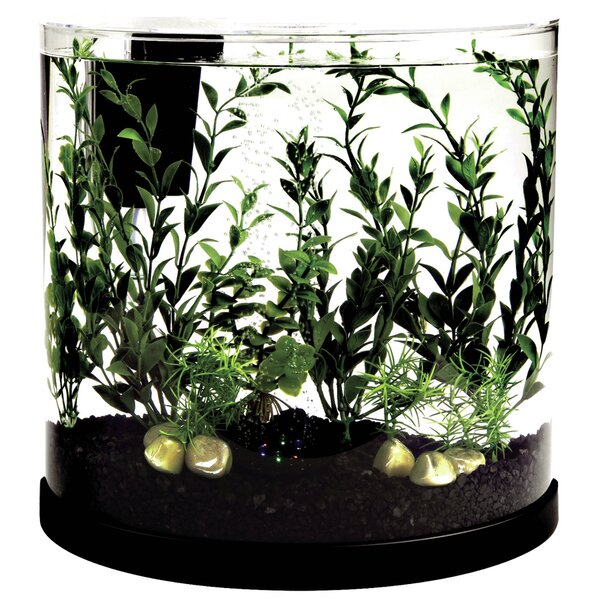 3 Gallon Bubbling Half Moon Aquarium Kit by Tetra
