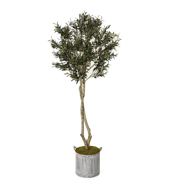 Olive Tree in Planter by Gracie Oaks
