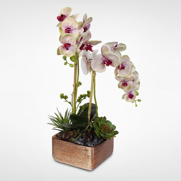 Handmade Phalaenopsis Orchid with Succulents Floral Arrangement in Ceramic Pot by Everly Quinn