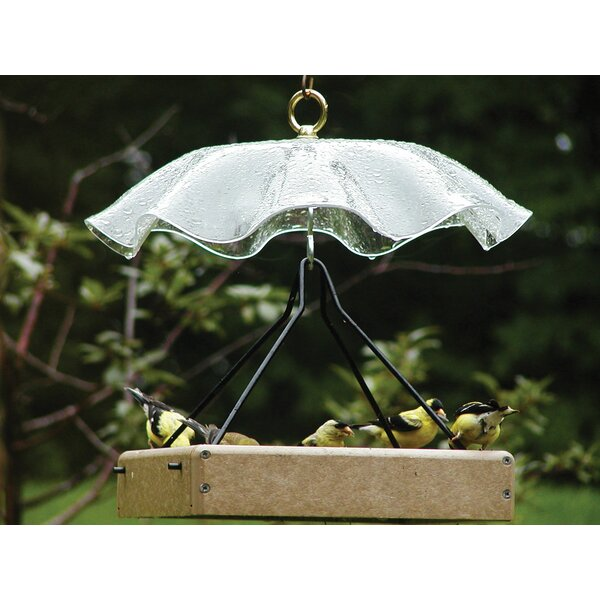 Acrylic Protective Weather Guard Bird Bath with Br
