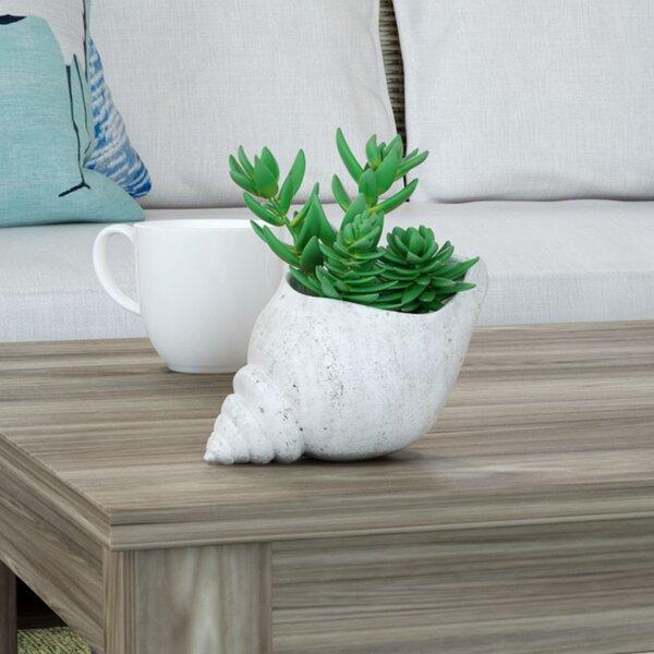 Grand Ridge Desktop Succulent Plant in Shell by Beachcrest Home