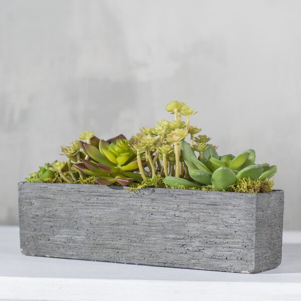 Succulent Garden in Rectangle Box by Mercury Row