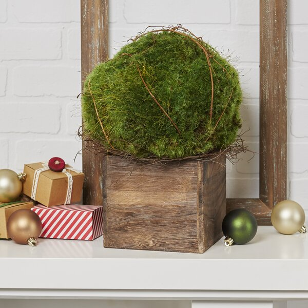 Yaxley Preserved Moss Topiary by Birch Lane™