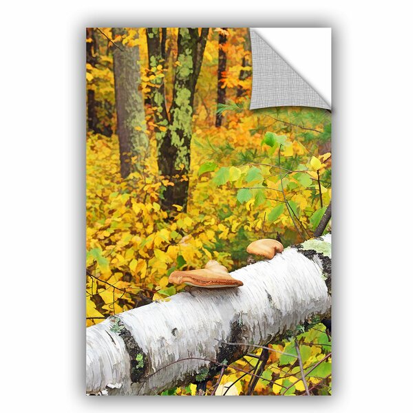 Fallen Birch Wall Decal by Loon Peak