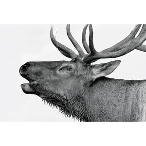 'Deer' Graphic Art Print on Canvas by East Urban Home