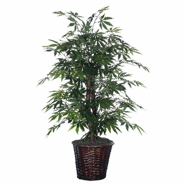 Japanese Bush Floor Plant in Pot by Three Posts