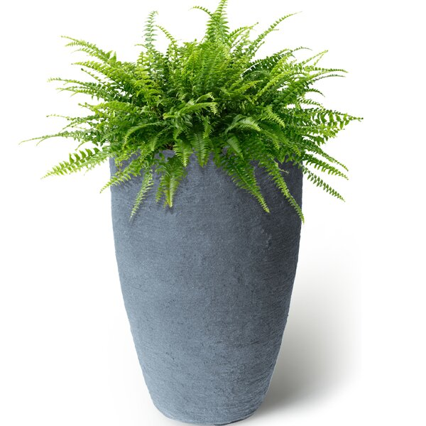 Callan Self-Watering Plastic Pot Planter by Alcott Hill
