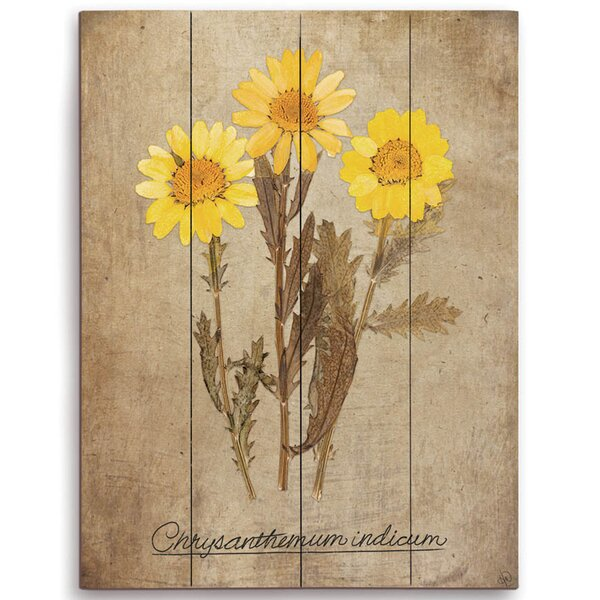 Chrysanthemum Indium Graphic Art on Plaque by Click Wall Art