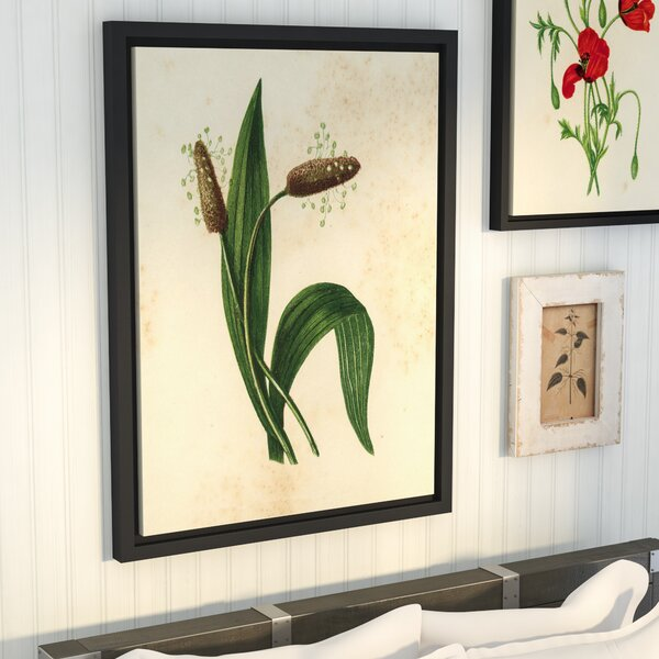 Ribwort Plantain Graphic Art on Wrapped Canvas by Laurel Foundry Modern Farmhouse