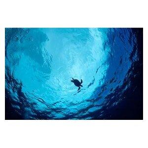 'Blue Green Sea Turtle' Photographic Print on Canvas by Latitude Run
