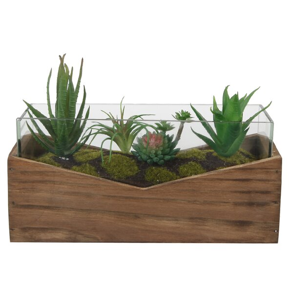 Desktop Succulent Plant in Planter by Wrought Studio
