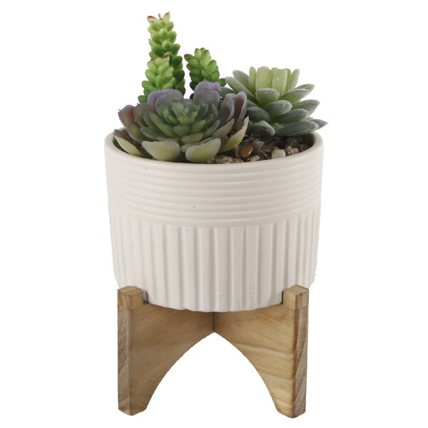 Strip Ceramic Desktop Succulent Plant with Stand by George Oliver