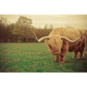 Portrait of a Scottish Highland Steer Photographic Print on Wrapped Canvas by Loon Peak