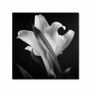 Lily Photographic Print on Wrapped Canvas by Trademark Global