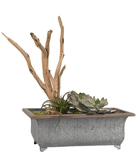 Echeveria Tilandsia and Ghostwood Floor Succelent Plant in Planter by World Menagerie