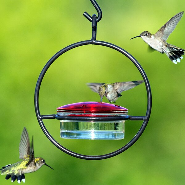 Hummingbird Feeder by Couronne