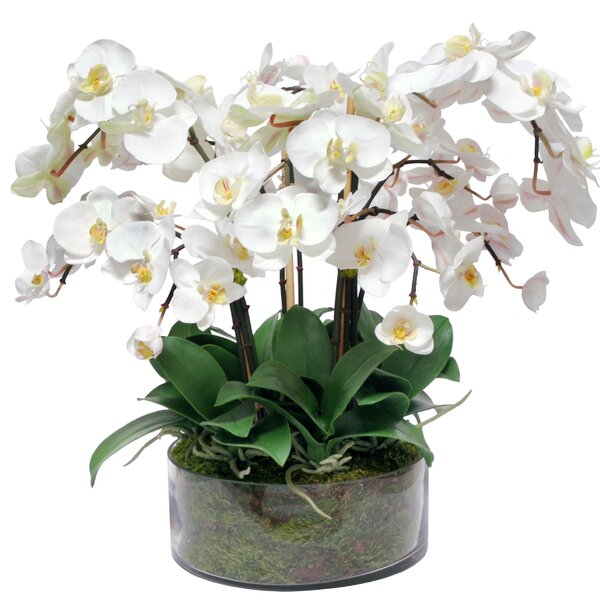 Phalaenopsis Orchids Centerpiece in Vase by Jane Seymour Botanicals