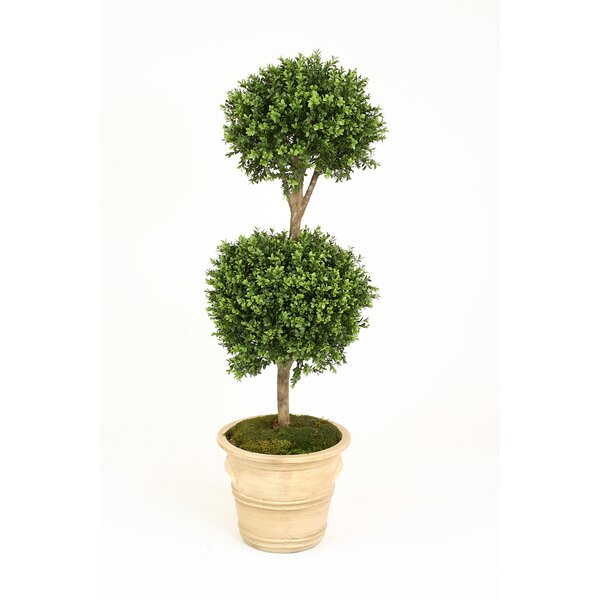 Boxwood Double Ball Topiary in Pot by Distinctive Designs