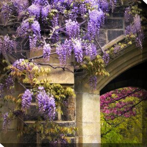 Wisteria Bloom Framed Photographic Print on Wrapped Canvas by West of the Wind Outdoor Canvas Art