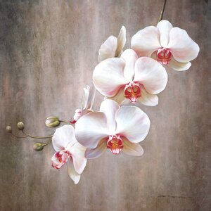 'Orchid Bloom' by G. Salman Painting Print on Wrapped Canvas by Portfolio Canvas Decor
