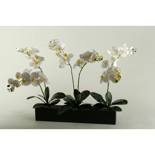 Cream Phalaenopsis Orchids in Black Wooden Rectangle Planter by D & W Silks