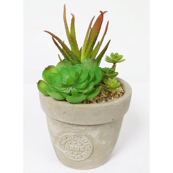 Artificial Desktop Succulent Plant in Pot by Bungalow Rose