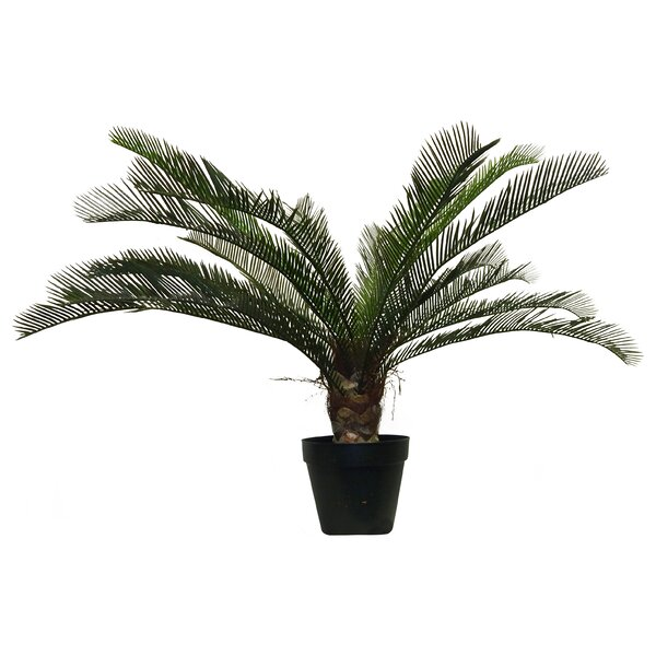 33 Cycas Palm Tree in Container by Beachcrest Home