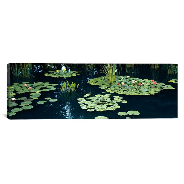 Panoramic Water Lilies in a Pond, Denver Botanic Gardens, Denver, Colorado Photographic Print on Wrapped Canvas by iCanvas