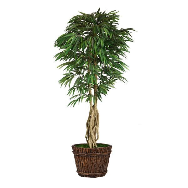 Willow Ficus Tree in Planter by Bayou Breeze