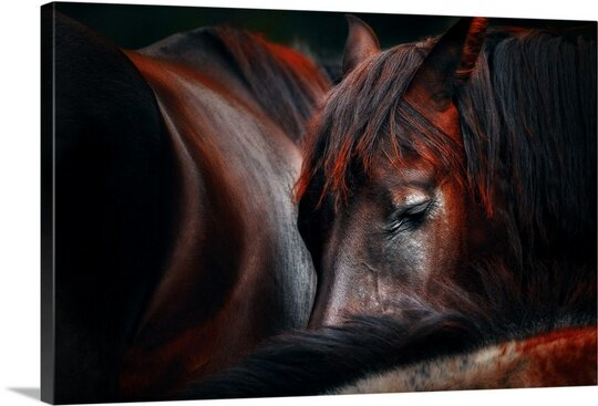 Sleep Huddle by Martin Stantchev Painting Print on Canvas by Canvas On Demand