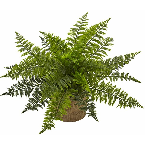 Ruffle Fern Bush Desktop Plant in Planter (Set of 2) by Nearly Natural