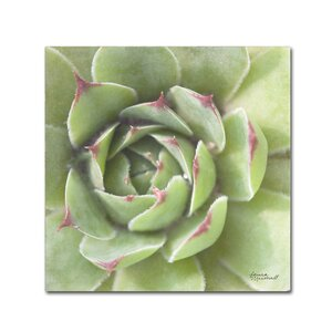 'Garden Succulents II Color' Photographic Print on Wrapped Canvas by Trademark Fine Art