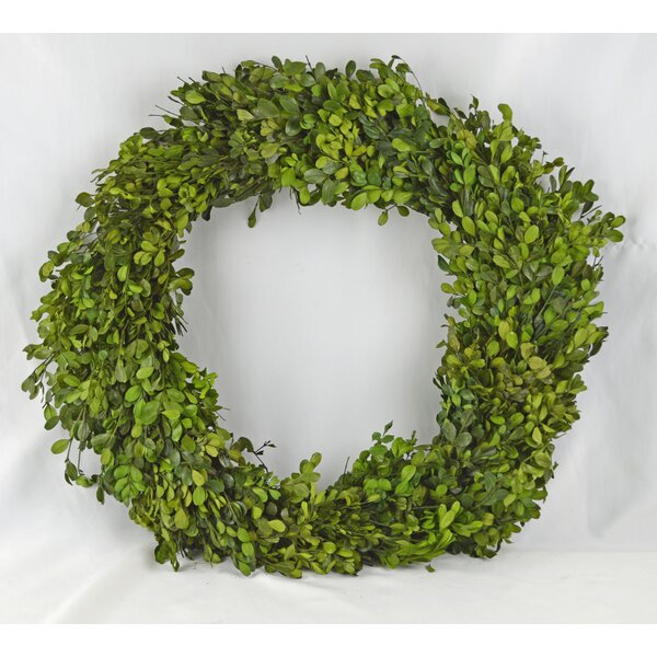 Boxwood 24 Wreath by Red Barrel Studio