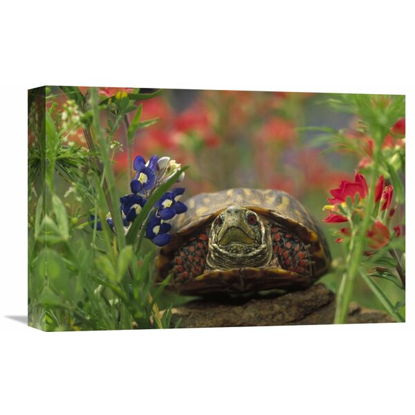 Nature Photographs Western Box Turtle among Lupine and Indian Paintbrush, North America Photographic Print on Wrapped Canvas by Global Gallery