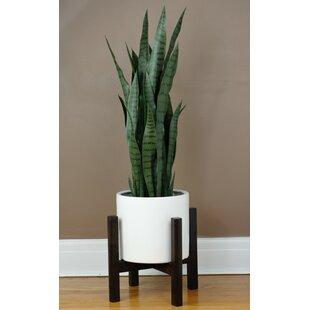 Online Reviews Branton Plant Stand ByGeorge Oliver