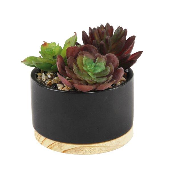 Mix Desktop Succulent Plant in Planter by Ebern Designs