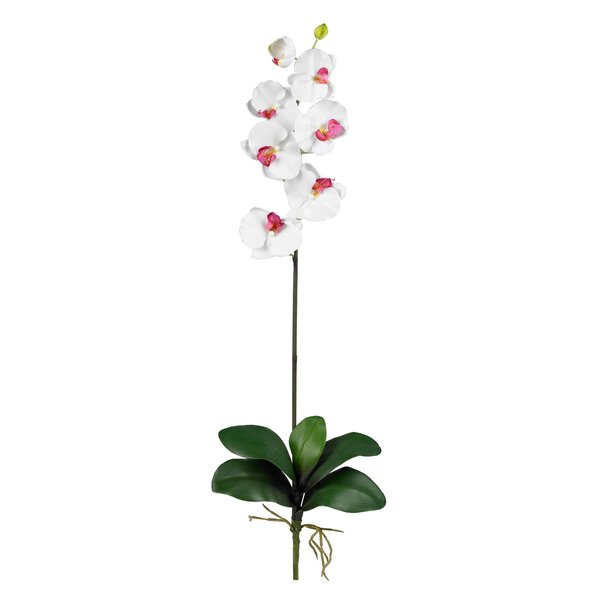 Phalaenopsis Floral Arrangements in White (Set of 12) by Nearly Natural