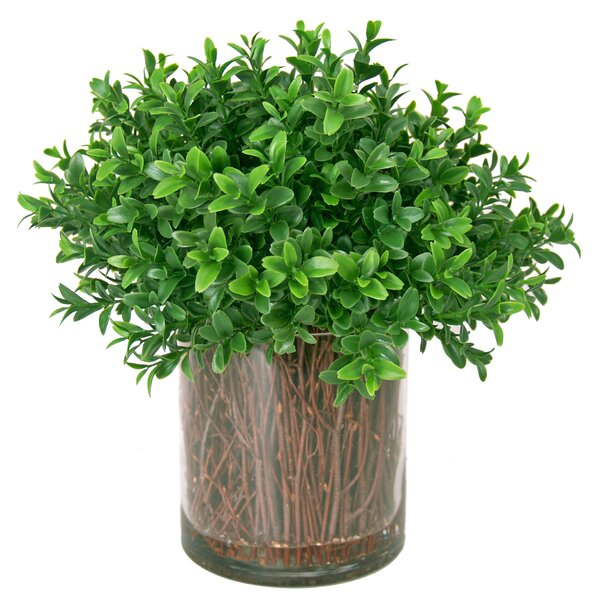 Boxwood Shrub in Planter by The Holiday Aisle
