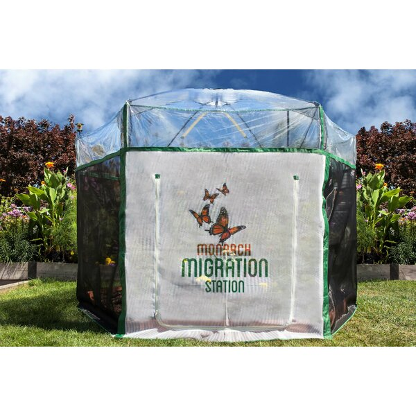 Pro Butterfly Pollinator 8 Ft. W x 7 Ft. D Hobby Greenhouse by Frame It All