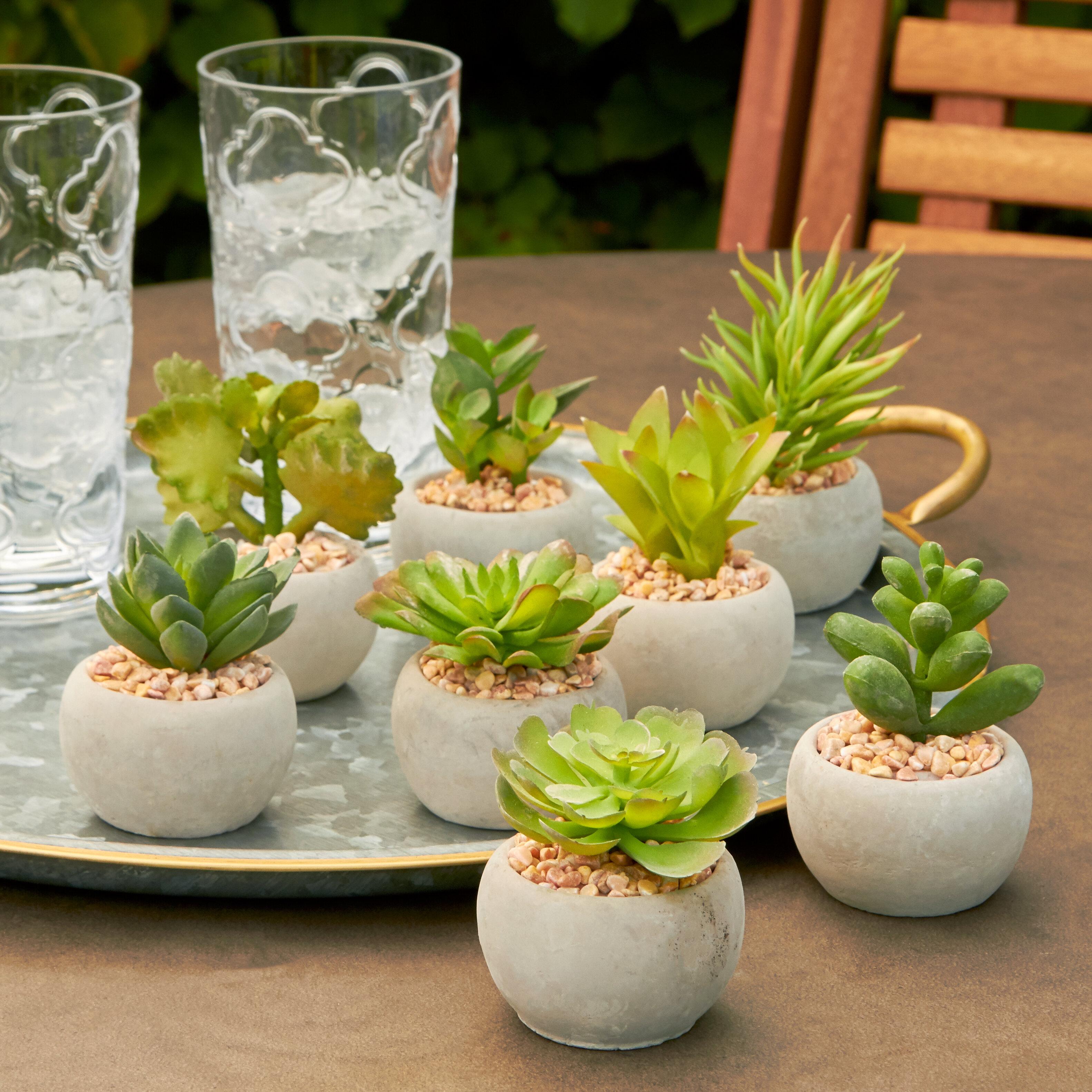 8 Piece Succulent Pot Reviews Joss Main