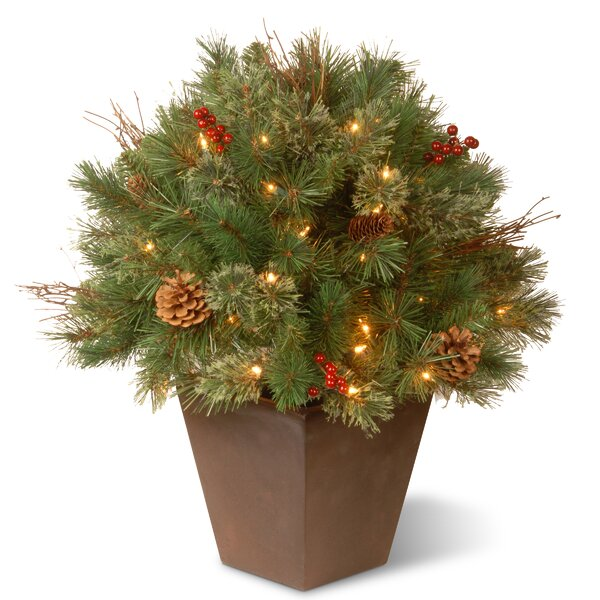 Pre-Lit Glistening Pine Porch Bush Foliage Topiary in Urn by The Holiday Aisle